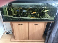4' Tank in a Beach unit with Breeding pairs of Saulosi