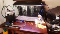 Aquael 180 ltrs bowed fish tank set up marine or tropical