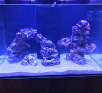 Marine fish & equipement for sale