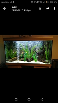 4 ft fish tank with stand for sale