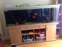 6.5 foot Rena fish Tank for sale �0