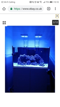 Reef Livestock in Red Sea reefer 250 FULL MARINE SETUP