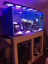 5ft and 3ft fish tank breakdowns