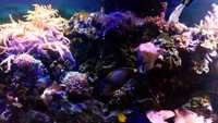Corrals and Marine fish in Complete marine fish tank set-up