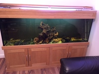 6x2x20 inches solid oak fish tank for sale