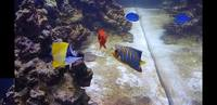 Marine fish- regal angel, tang, flame angel, clownfish
