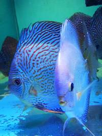 Various Discus for sale