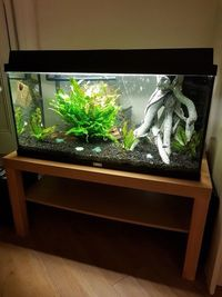 Whole 120L tropical aquarium must go �0 for everything