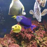 Large marine fish for sale