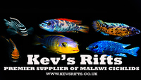 Quality Malawi Cichlids - Wild, F1 and Tank Bred Groups