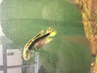 Assortment of freshwater fish for sale