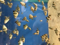 Lots of tropical fish available