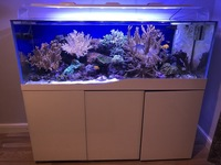 Cleair Aquarium for sale marine set up with all stock inc