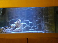 Rehoming of any fish, coral or rock