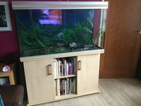 RENA 4 foot fish tank and stand for sale including EHEIM professional 3 filter.