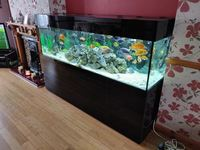 Large Aquarium 7 Foot, �00 including fish