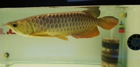 PLANET AROWANA STOCK CLEARANCE PLEASE CHECK MY ADVERTS