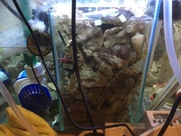 Reduced for sale before 07/04/19 - 40KG of Live Rock