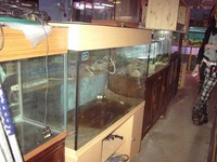 Large 10 mm glass Tanks for sale.