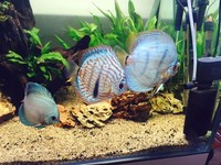 Open offers - Large discus pair