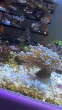 Kinda garden rocks Frags over 20 Different corals