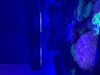 Marine fish tank - ecotech Radion g4 aquatronica ' maxspect now breaking