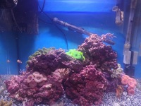 MARINE FISH AND CORALS IN TMC SIGNATURE 600 COMPLETE REEF SYSTEM - OFFERS OVER �0.00