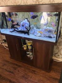 4ft Jewel full tank set up and Malawi fish