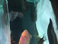 Very large fish job lot for sale �0 Ono for all fish bargain 100s spent