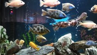 Complete 300L Malawi Cichlid Aquarium with extras, smart lighting etc