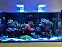 Livestock with matured corals in EA Reefpro 1200s