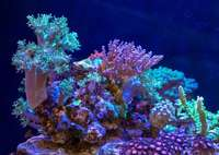 EA Reefpro 1200s 2 years old and perfectly matured corals