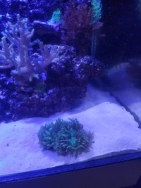LIVE MARINE CORALS & FISH IN FULL MARINE SET UP �0 ONO