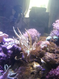 Large leather finger coral s for sale