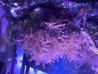 � - Large Live Rock With Lots Of Kenya Tree & Xenia Coral, Aquarium, Marine.