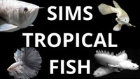 SIMS TROPICAL FISH - THE COMPLETE AQUATIC EXPERIENCE - NOW OPEN ONLINE