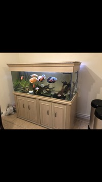 Cichlids and others in 5ft fish tank