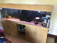 ND 7x2x2 Fish Tank & Stand. Full Set Up