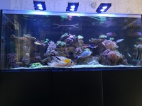 Red Sea Reefer 625 xxl