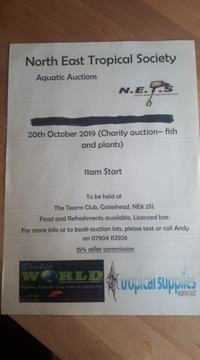 1 WEEK TO GO  N.E.T.S. AQUATICS CHARITY AUCTION (FISH AND PLANTS ONLY)