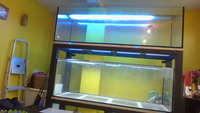 2 AQUARIUM 530 and 600 liters , stand - ONLY 450 POUNDS