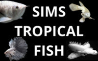 SIMS TROPICAL FISH - SHIPPING AS NORMAL IN THE UK