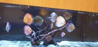 12 stendker discus various sizes