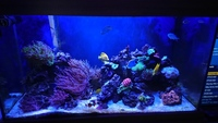 Reef Livestock in 4x2x2 full marine set up for sale