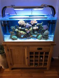 Full marine aquarium setup for sale