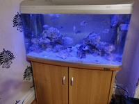 Fish Tank Complete With Fish & Extras