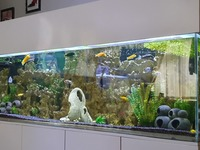 Full cichlid setup SOLD