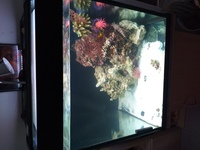 2 ft cube tank Marine 2 ft high stunning with stand looks great � paid �0