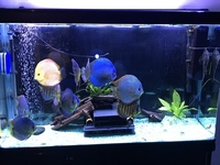 Stenker discus for sale