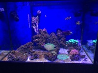 300L approx Full Marine Fish tank setup for sale - �0